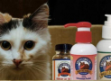 Best Krill Oil Supplements for Cat and Benefits