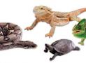 Best Reptile Calcium, Vitamin D3, and Multivitamin Supplements