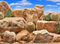 Best Terrarium and Vivarium Backgrounds