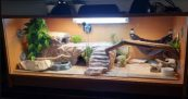 Best Bearded Dragon Enclosure Types Like Glass, Wooden, or PVC