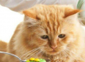 Which Are the Essential Minerals for Cats?