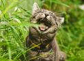 Why Do Cats Eat Grass and Do They Like Grass