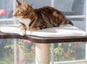 Why Do Cats Like Window Perches and other Elevated Spots?
